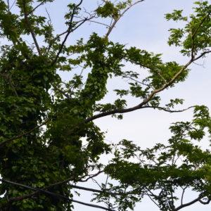 sf-faune-perroquets-hide-c-w-bound