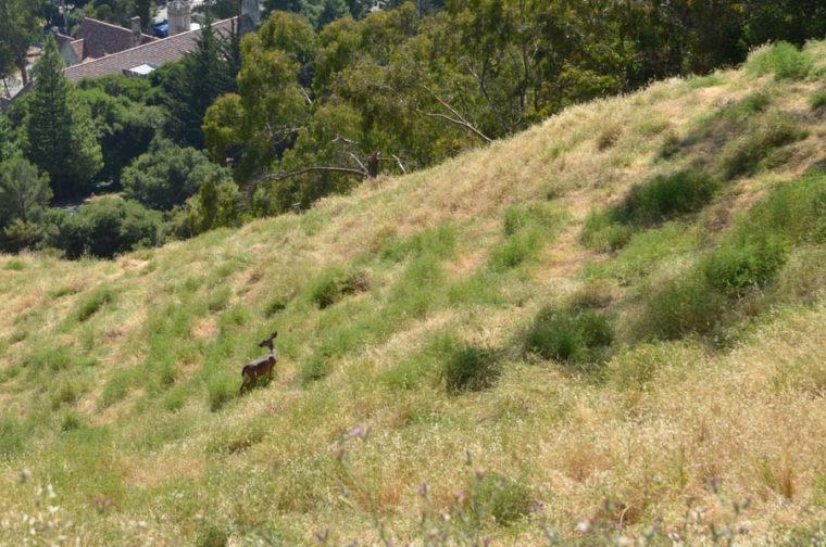berkeley-deer-hill-c-w-bound