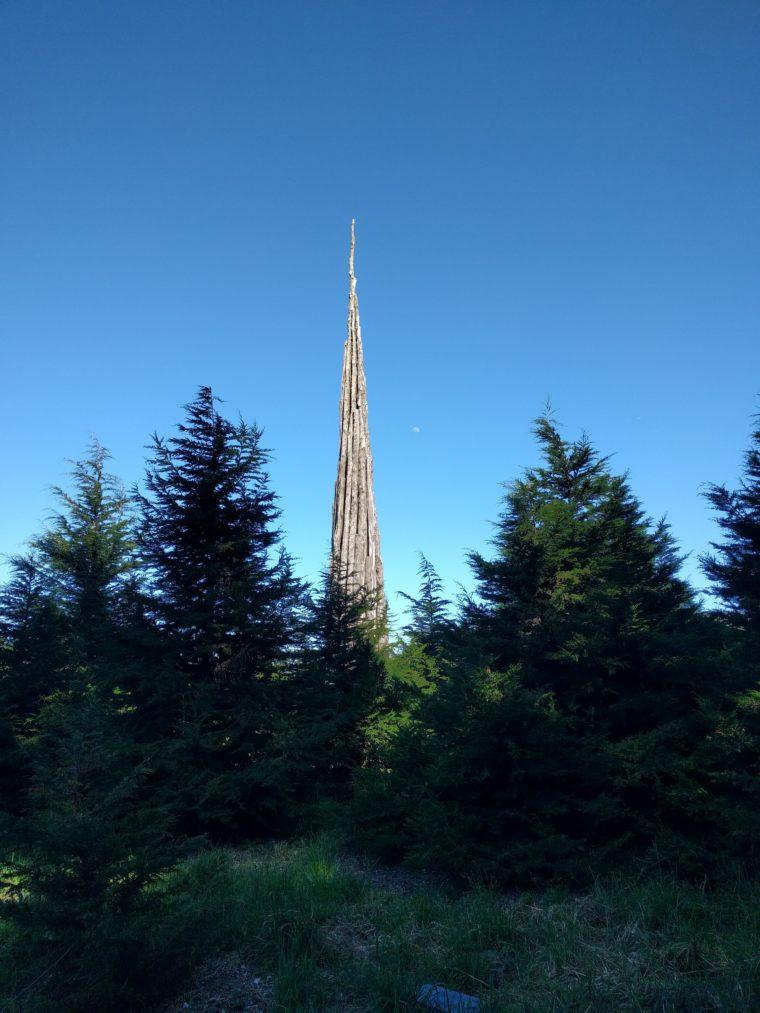sf-presidio-tree-sculpture-c-w-bound