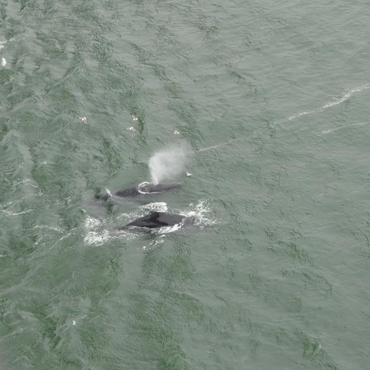 sf-whales-jet-c-w-bound