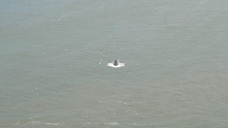 sf-whale-birds-c-w-bound