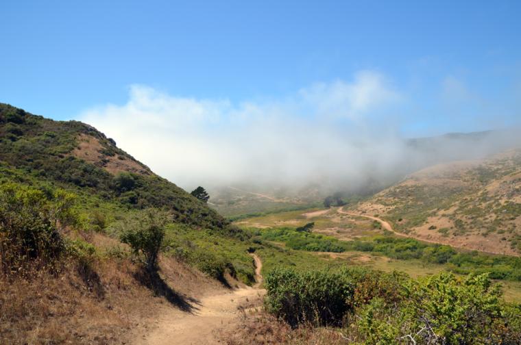 marin-rando-trails-fog-c-w-bound