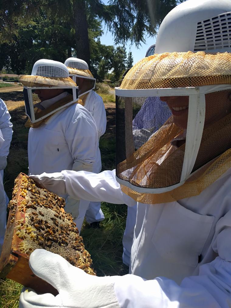 sacramento-bee-hive-pauline-c-w-bound