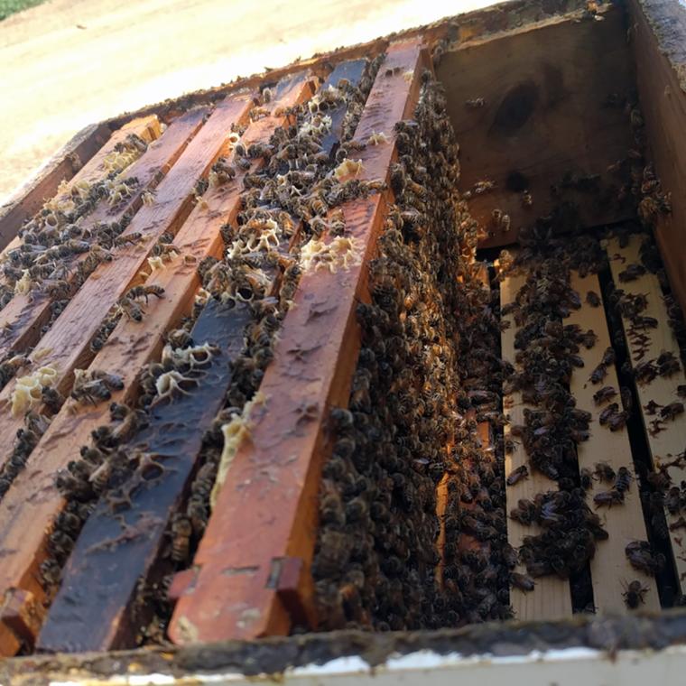 sacramento-bee-close-up1-c-w-bound