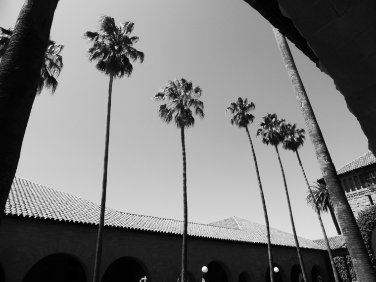 stanford-nb-palm-trees-roof-c-w-bound