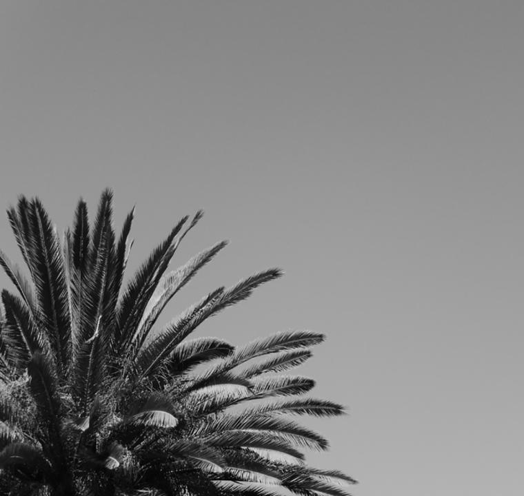 stanford-nb-palm-tree-quart-c-w-bound
