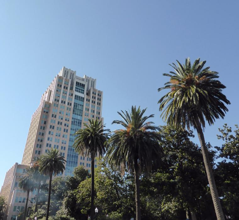 sacramento-palm-trees-c-w-bound