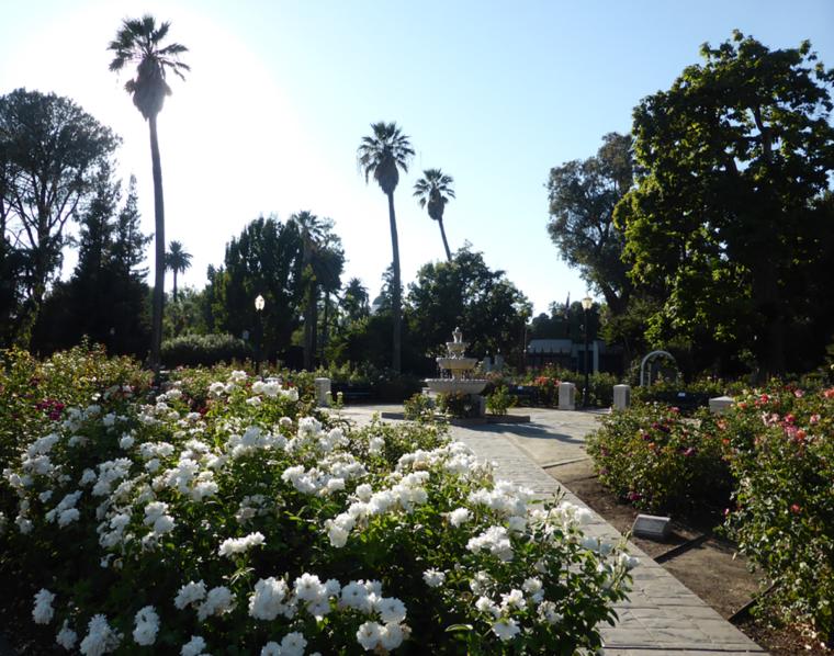 sacramento-rose-garden-c-w-bound