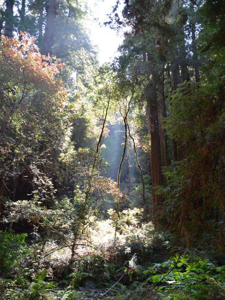 mw-light-small-trees-2-c-w-bound