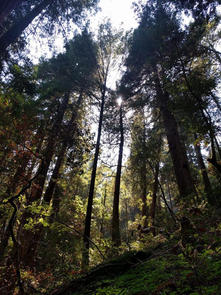 mw-trees-light-sun-c-w-bound
