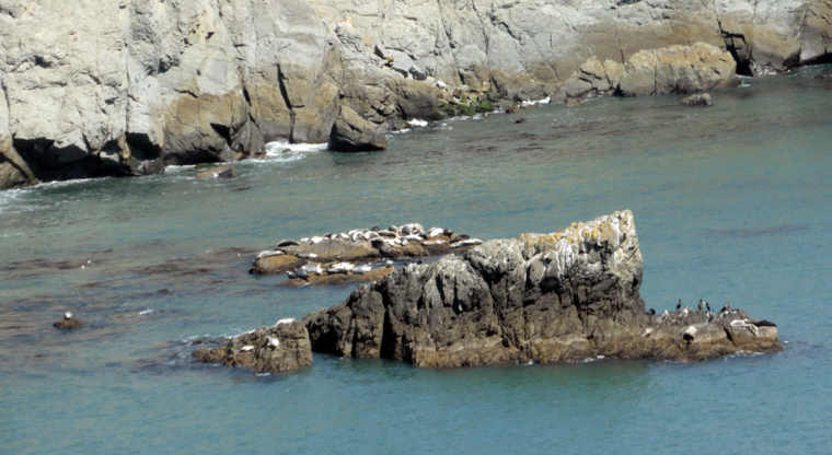 bonita-rodeo-seals-birds-rocks-c-w-bound