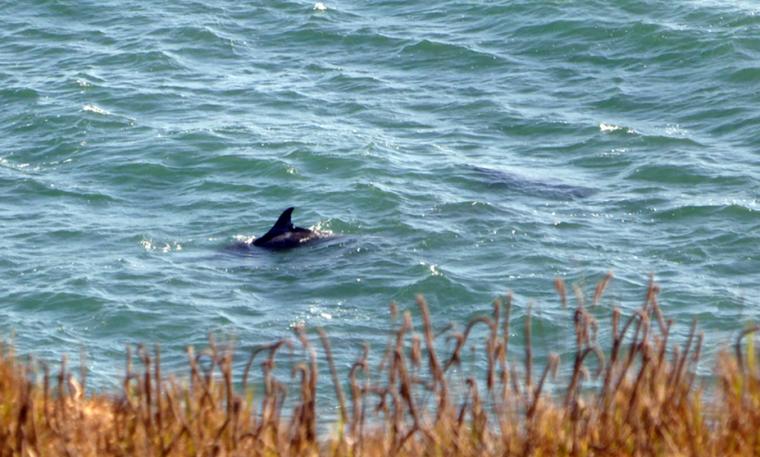 bonita-rodeo-beach-dolphin-c-w-bound
