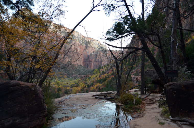 rtc-day1-zion-emerald-pool-view-c-w-bound