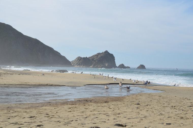 point-reyes-mcclures-beach-birds-c-w-bound