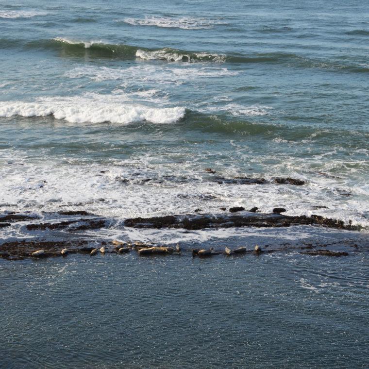 santa-cruz-fitzgerald-marine-reserve-seals-c-w-bound