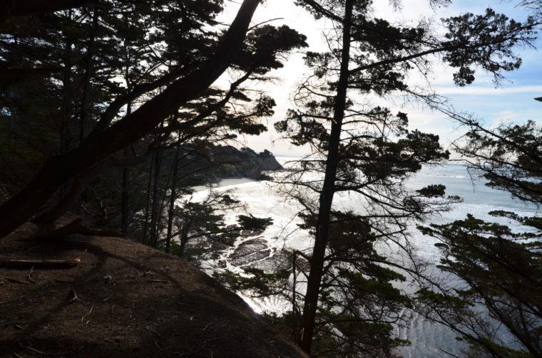 santa-cruz-fitzgerald-marine-reserve-cypress-trees-c-w-bound