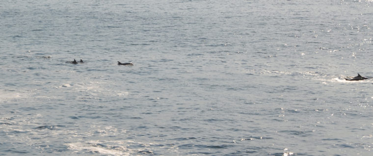 santa-cruz-dolphins-c-w-bound