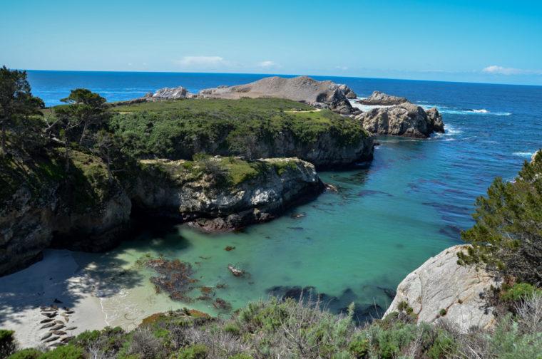 Point-Lobos-seals-cove-ensemble-c-w-bound