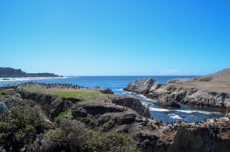 Point-Lobos-bird-island-c-w-bound