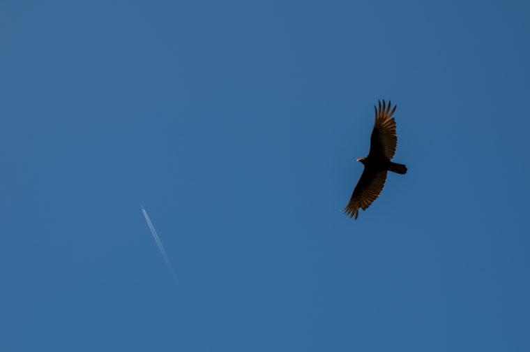 Point-Lobos-bird-plane-c-w-bound