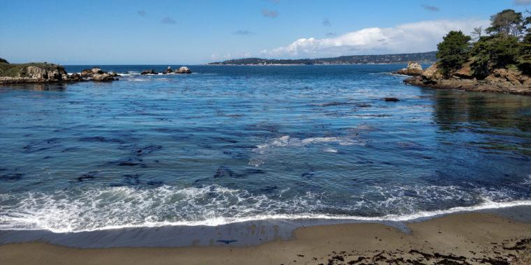 Point-Lobos-beach-waves-c-w-bound