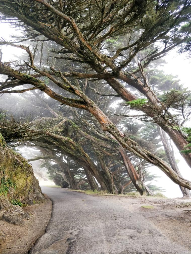cote-pacifique-2-point-reyes-cypress-c-w-bound